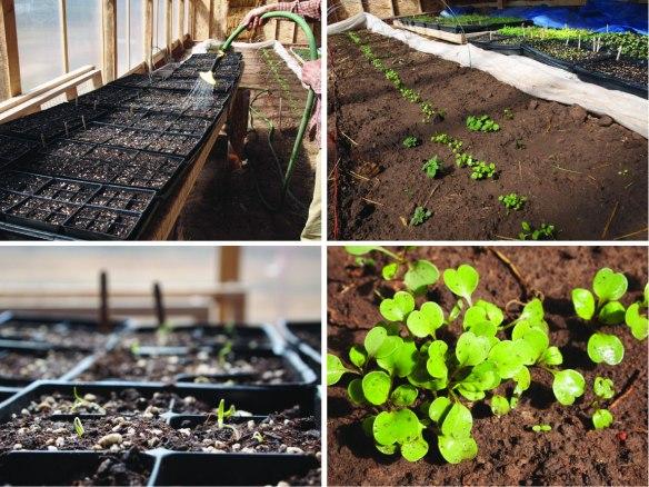 april 3rd greenhouse