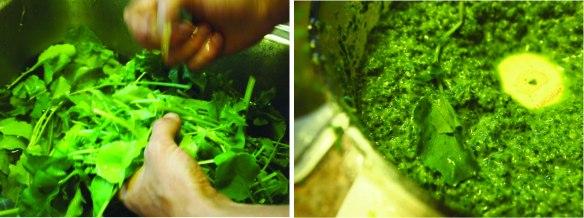 radish greens pesto please
