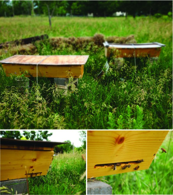 july bee hives