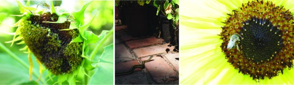 bird snake bug feeders