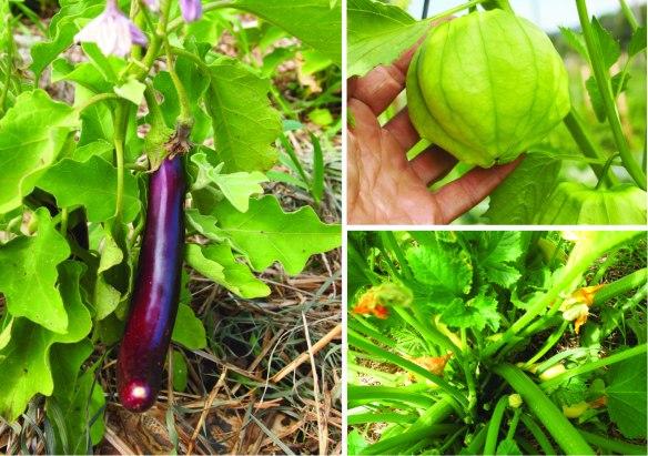eggplant tomatillo crooknecks