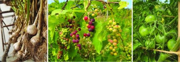 garlic grapes tomatoes