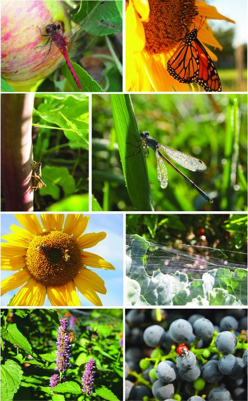 bugs_lots