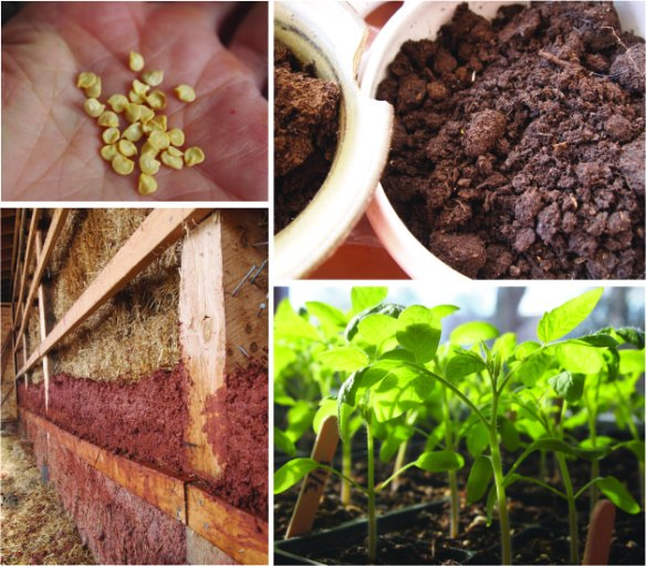 seeds_preps_cob_starts