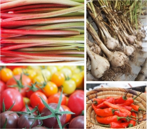 farm stand for website2