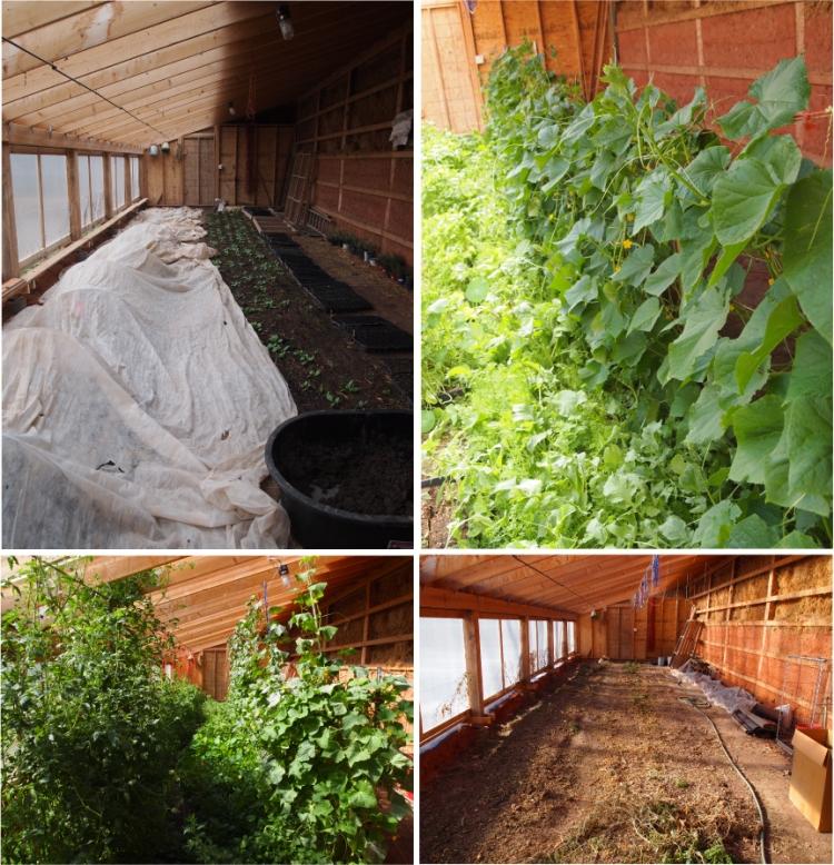 greenhouse panoramdemonium