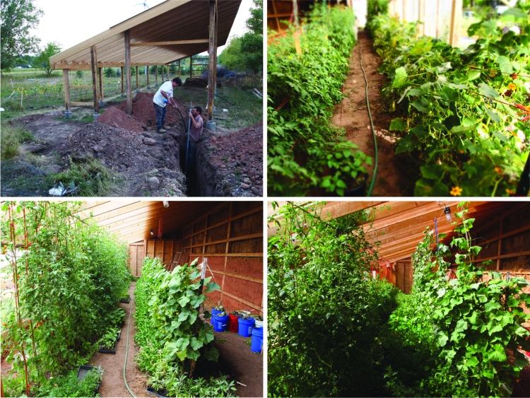 Sept greenhouse Pandemonium