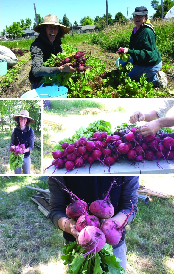 beets july 7