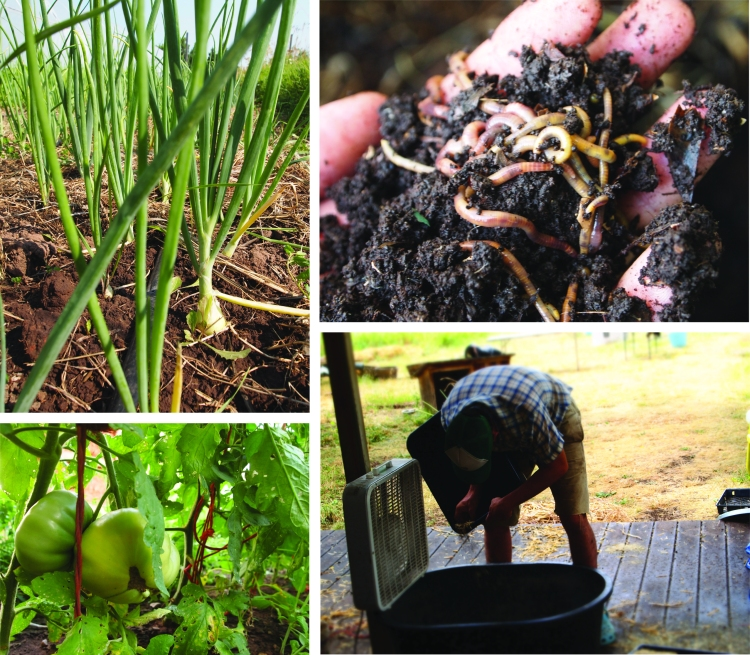 onions worms seed and tomatoes