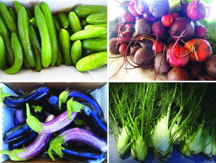 summer veg August 4