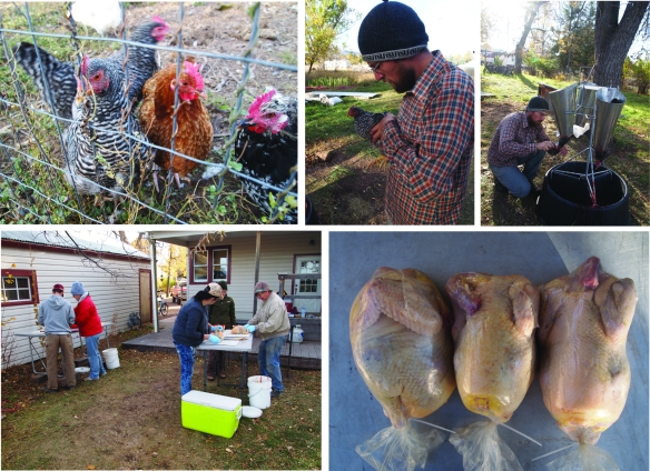 butchering-chickens